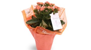 How Customized Gifts Are Ideal and Memorable Souvenirs of Love and Affection